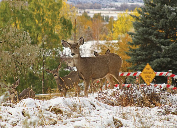 Several deer walk through land near the intersection of Pershing Street and Sandrock Drive on Monday afternoon. Craig Mayor Don Jones said he was prompted to organize a public workshop wit