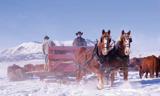 Tack Louthan drives the team as Chase Fix spreads hay behind a horse-drawn sleigh at Sweetwood Cattle Co. in North Routt County. Sweetwood still uses horses to feed cattle in the winter.