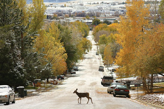 The city of Craig's method in resolving the issue of deer within city limits was one state and federal elected officials should try to emulate in dealing with public matters, Craig Daily Press columnist Janet Sheridan writes. Her column on the city's tact regarding the deer originally appeared in the Feb. 6 Denver Post.