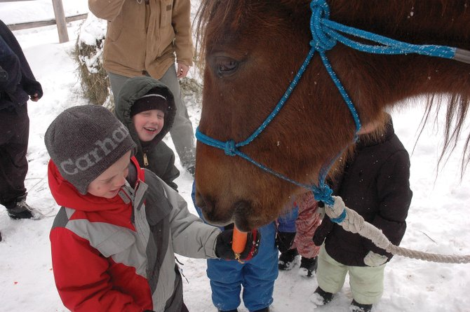 Cody Riser, 4, feeds a carrot to Carlito on Thursday at Sidney Peak Ranch. Carlito was rescued from a Routt County property three weeks ago when neighbors noticed he was starving and neglected.