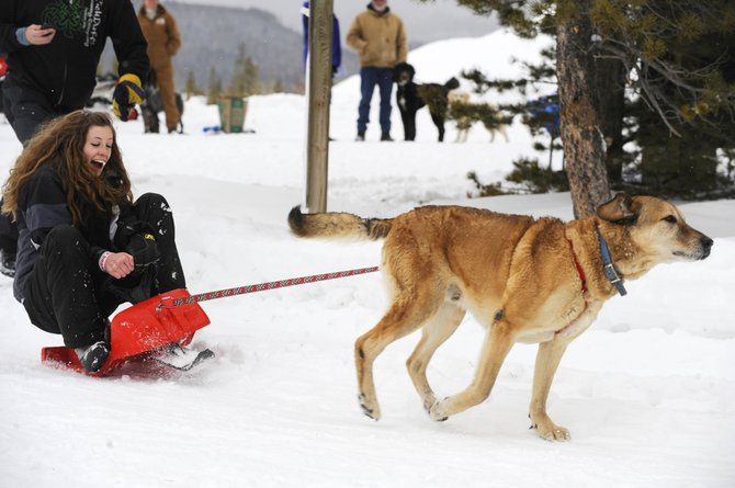 North Routt County resident Cadie Swinsick is pulled by Bear during the Steamboat Lake Snow Club's inaugural Snow Carnival on Saturday at Steamboat Lake.