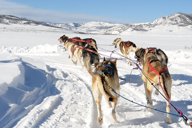 A team of eight dogs from the Double T Kennel tear down the trail near Stagecoach Reservoir on Wednesday. Tom Thurston and his wife, Tami, partnered with Grizzle T Kennel near Steamboat and began offering dog sled tours last winter. Many of the dogs used are from Tom Thurston's Iditarod teams.
