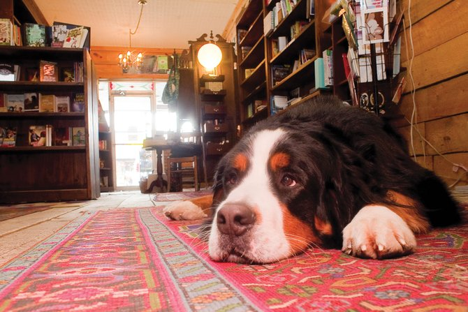 Toby, who is a fixture at Epilogue Book Co. in downtown Steamboat Springs, will have to find a new place to hang out. The local bookstore, which had been in business in Steamboat Springs for 8 years, will close its doors in April. For story, see page 3.