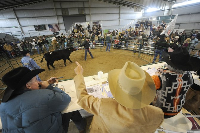 North Western Colorado Bull Sale auction commentator Bill Gay, middle, tells the crowd about a bull Saturday at the Routt County Fairgrounds in Hayden. The average sale price of the bulls was $2,706.