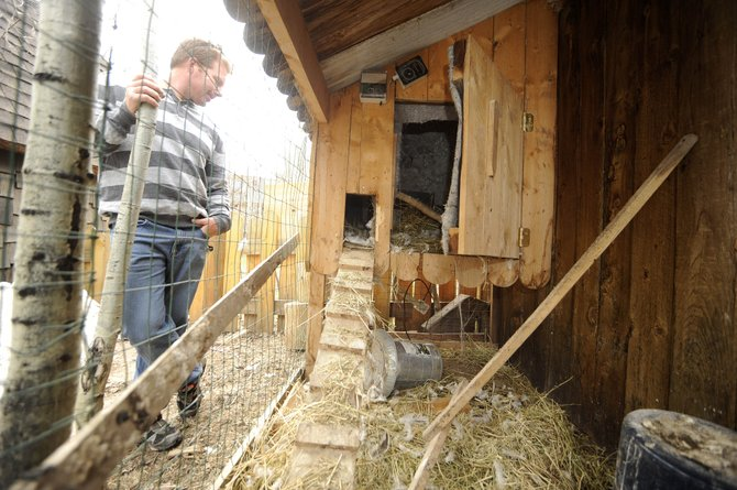 Cedar Beauregard's chicken coop at his downtown Steamboat Springs home is empty after a bear entered the coop and ate five chickens.