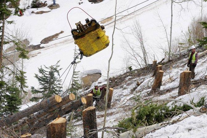 Lodgepole pine trees killed by pine beetles are removed Thursday from the Steamboat Ski Area. The loss of the pines might affect water flows.