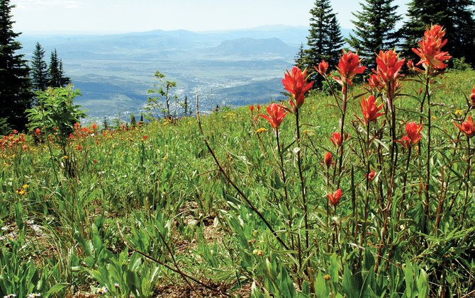 It could be a while before the view looks like this from the top of Steamboat Ski Area. Resort officials expect some trails to open June 24. This shot was taken late last July.