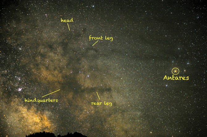 Can you spot the Milky Way's Great Dark Horse Nebula? In this recent image, he is just left of center, reared back on his hind legs. Formed from vast clouds of interstellar dust in silhouette against the star clouds of the Milky Way, the Dark Horse is hiding just east of the red supergiant star Antares in our summer sky.