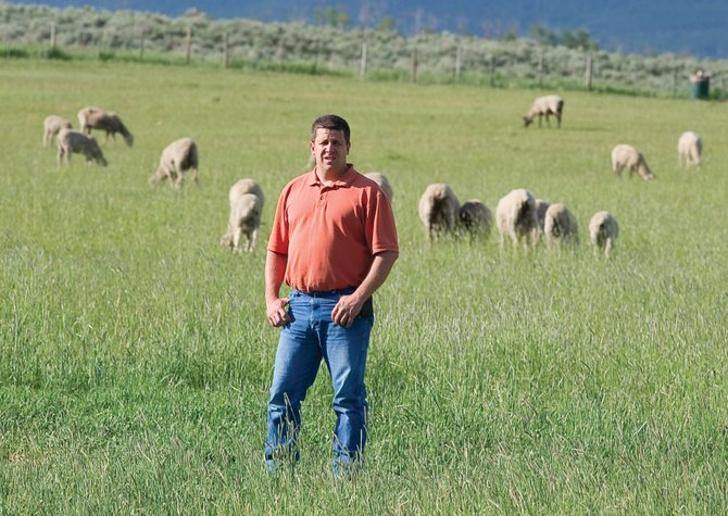 Sheep rancher Rod Wille stands on his family's ranch South of Steamboat Springs Wednesday evening. Wille, and other local ranchers are benefiting from higher prices and lamb meat.