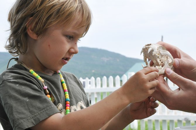 Sam Kitchen observes a bobcat skull Wednesday at a Yampatika summer camp at Legacy Hills Ranch. The camp received a $13,600 grant from the Colorado Kids Outdoors Initiative that they used to fund three interns who are working at the camp this summer.