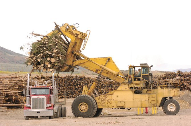 Logs are unloaded from a semi at the Confluence Energy pellet mill in Kremmling. Dead-tree cutting across northern Colorado and southern Wyoming has left an estimated 170,000 piles of trees and slashed branches, U.S. Forest Service supervisors said last week.