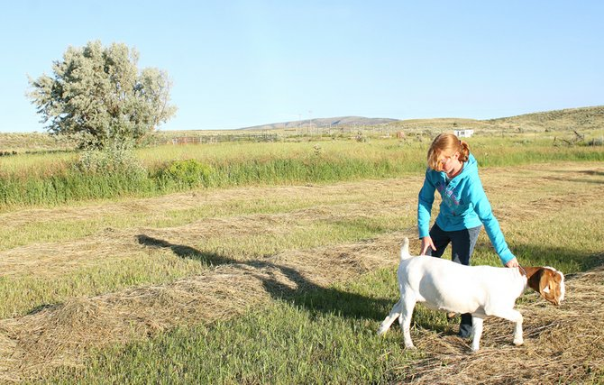 Emma Balstad guides her goat, Lena, on a walk July 20 in Maybell. Emma, who takes four animal projects in addition to cake decorating, said that 4-H isn't just for kids who live in the country, but that 4-H offers a wide range of project types.