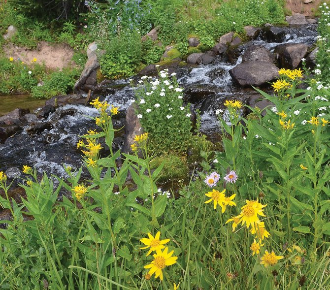 Streams in the Flat Tops Wilderness Area are still running cold and clear with melting snow, and wildflowers continue to bloom unusually late in the summer.