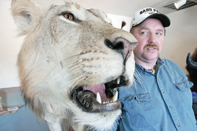 "Craig taxidermist Scott Moore stands in June next to the prize-winning piece, ""Can't Kill the King,"" which he created with local taxidermist Leland Reinier. The two men won first place for collective artist at the Colorado State Taxidermy Competition earlier in June in Salida. The piece, which features an African lion whose skin was purchased from eBay, is on display at Moore's business, Mountain Man Taxidermy in Craig."