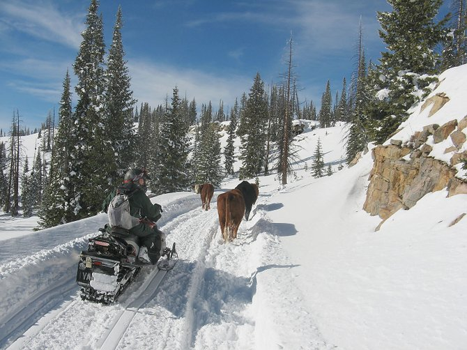U.S. Forest Service personnel on snowmobiles Wednesday aided two ranchers from North Park in the successful effort to rescue two cows and calves from the Continental Divide on Buffalo Pass northeast of Steamboat Springs.