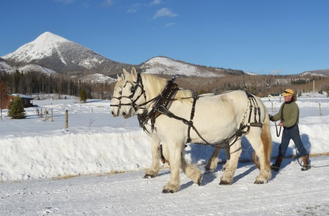 Head wrangler Rick Welfel works Thursday with a team of Percherons that will pull sleighs at Hahn's Peak Roadhouse in North Routt this winter.