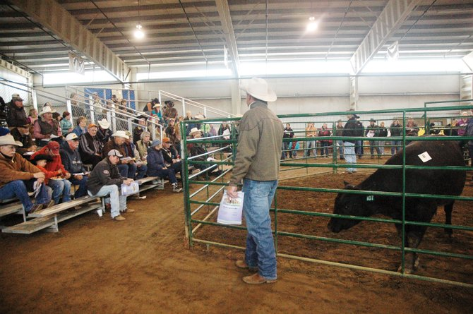More than 100 people gathered Saturday afternoon at the Routt County Fairgrounds for the 10th annual North Western Colorado Bull Sale, which netted $112,000 from 35 bulls, the highest ever.