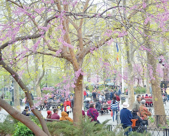 A park in New York's Chinatown was awash in blossoms last week.