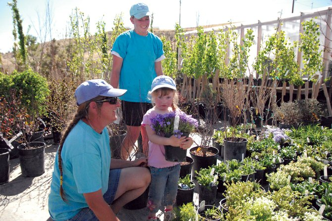 Bears Ears Landscapes owner Suzanne Meyer, left, and employee Jacquelyn Denker, above, assist Suzanne's daughter, Peyton, 3, in tending to a creeping phlox plant amid the many trees, shrubs and flowers surrounding the business, located at 1815 Moffat County Road 183. Meyer said she has been seeing an increase in requests with the start of warm weather, as have other local landscapers.