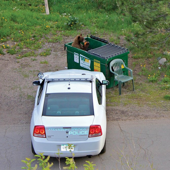 A bear snacks on garbage in a Dumpster earlier this month near 11th and Oak streets in downtown Steamboat Springs. Police say they plan to be more aggressive in enforcing rules meant to keep bears out of trash cans and Dumpsters.