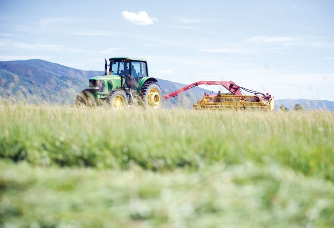 Longtime Routt County rancher Larry Monger cuts alfalfa near the intersection of Mount Werner and River roads Friday afternoon. Drought conditions have ranchers concerned about how to feed their herds this winter.