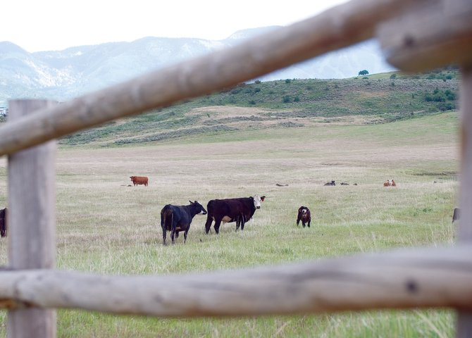 Local officials are urging members of the agricultural community to make plans to take care of one another and their livestock in the event of wildfires this summer.