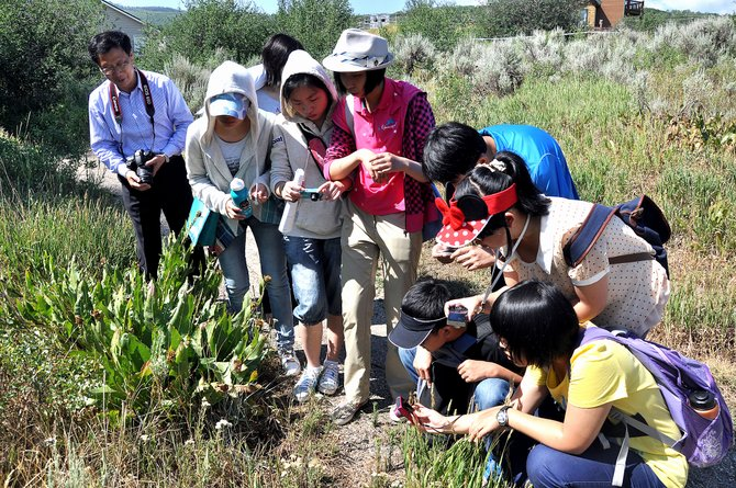 Chinese students on a Yampatika nature hike take pictures of flora Thursday on the way to Lithia Springs. The Lowell Whiteman School is hosting the students for two weeks during a new summer program.