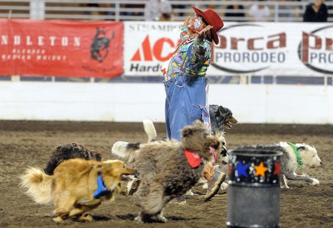Bert Davis and his dogs take a bow during Friday night's Steamboat Springs Pro Rodeo Series performance.