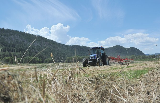 Rancher Michael Hogue hays a pasture west of Steamboat Springs on Thursday afternoon.