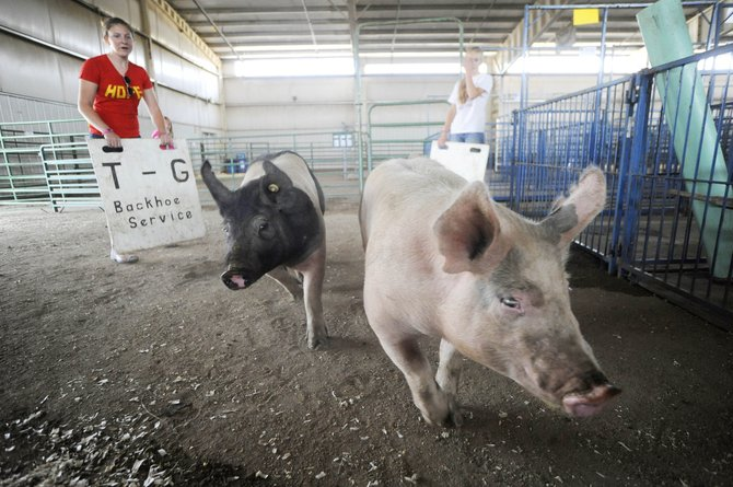 Routt County Fair participants Shannon Parks, 15, of Steamboat Springs, and McKenzie Millard, 14, lead pigs Katniss, left, and Prim toward their pen Tuesday at the Multipurpose Building in Hayden. The pigs belong to Sawyer Lorenz, 18, of Steamboat, and are being shown Wednesday.