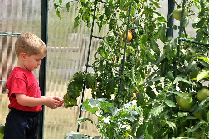 Steamboat Springs Montessori student Emmett Hannon inspects a plant Sunday inside the new greenhouse at his school. The greenhouse is one of the new additions to the campus that will start its 16th year in Steamboat on Monday.