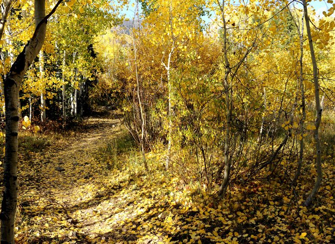 The trail to Gold Creek Lake is golden itself, covered by the leaves from overhead aspens.