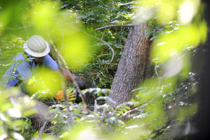 Bill Gossard uses a chain saw to cut down a lodgepole pine tree in August 2011 at Steamboat Ski Area alongside the Main Drag ski trail. Logging at the ski area is scheduled to resume Monday, resulting in hiking and mountain bike trail closures.