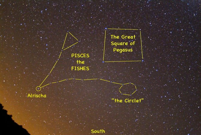 Look for Pisces the Fish high in the southern sky at about 8 p.m. in early November. Use the prominent Great Square of Pegasus to zero in on this faint but distinctive constellation of the zodiac. 