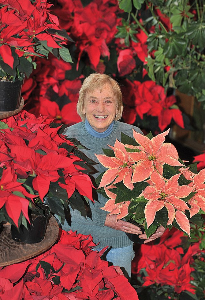 Susanne Kane Bostrom, owner of Alpine Floral, is surrounded by poinsettias as she stands in the atrium of her store. After 36 years in business at the location, Susanne has decided to close the retail location, but she will continue to sell flowers online and handle orders for many of her longtime customers.