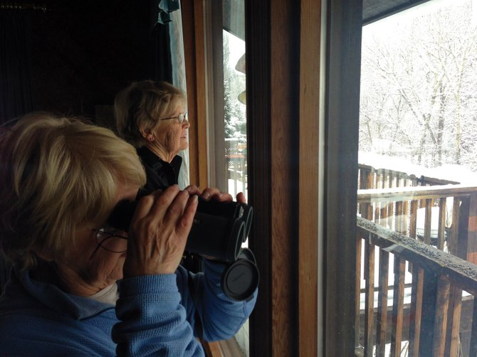 Florence Duty, left, and Marilyn Palmer scan for birds Saturday inside Jan and Vic Serafy's downtown home during Steamboat's annual Christmas Bird Count. The National Audubon Society event takes place in communities across North America.