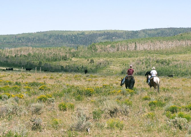 Riders check cattle by horseback on the G5 Home Ranch south of Yampa. The Routt County Board of Commissioners approved the expenditure of $825,000 in dedicated property taxes to help conserve the family ranch.