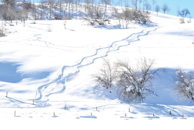 Skiers laid fresh tracks Thursday on a sloping hill just off 13th Street in Steamboat Springs. 