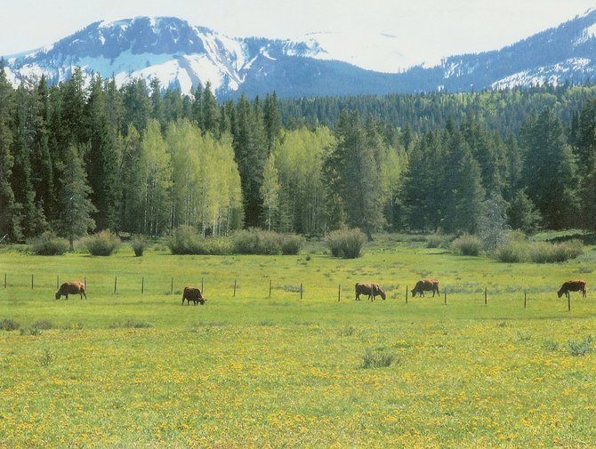 The Routt County Board of Commissioners voted Tuesday to approve the plans of the Colorado Cattlemen's Agricultural Land Trust, the Fetcher family and the purchase of development rights advisory board to conserve a 120-acre meadow on the Fetchers' Hahn's Peak Ranch in the shadow of Sand Mountain.