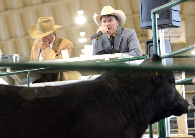 Auctioneer Troy Allen calls out Saturday at the North Western Colorado Bull Sale in Hayden.
