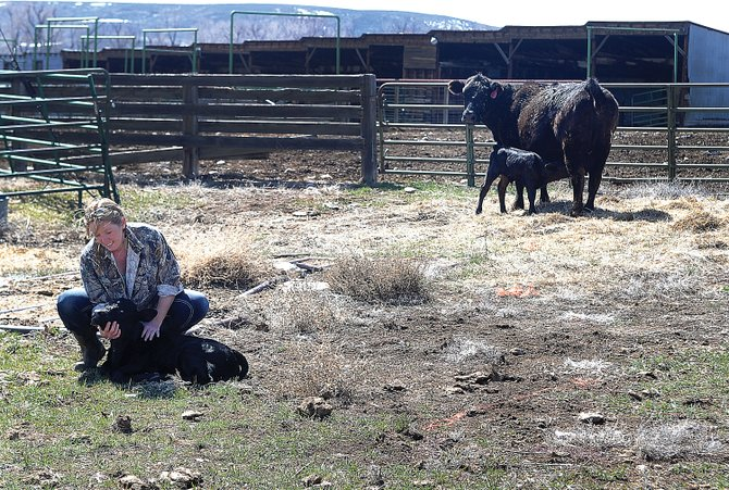 Rancher Mary Murphy sits on a four-wheeler on her ranch west of Hayden. Murphy is plenty tough enough to tackle the rugged chores that must be done on a ranch but also shows a maternal touch while checking on the newborns.
