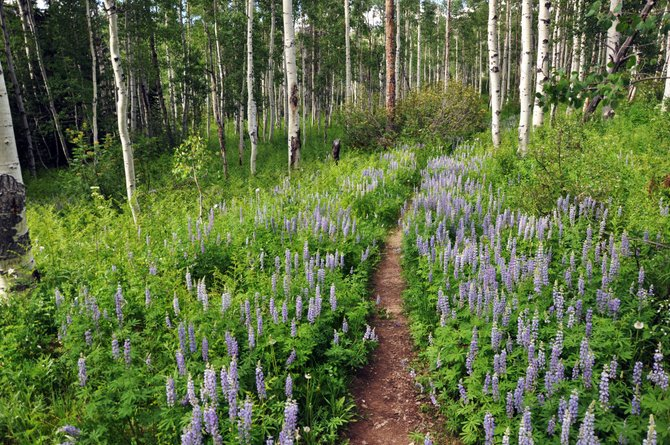 Wildflowers line much of the Soda Creek Trail