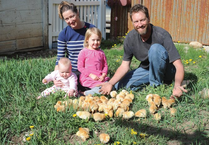 Josh Kilbane and his wife, Kirsty, are joined by daughters Sasha, left, and Esme as chicks arrive in the spring. The couple owns and operates Yampa Valley Farms in North Routt County.