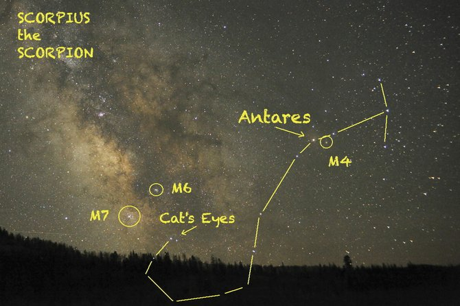 Look for the large fishhook-shaped pattern of Scorpius low in the southern sky on July evenings. His heart is marked by the red supergiant star Antares.