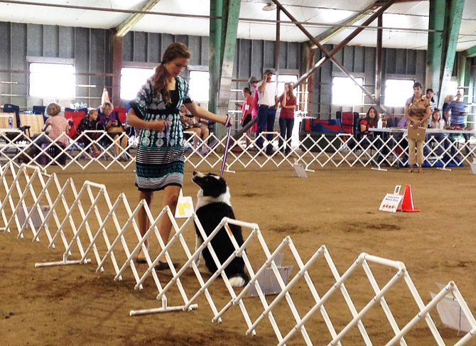 Brayden Anderson, 13, walks around her dog Tilly at a station in the rally event Tuesday morning at the Moffat County Fairgrounds. Anderson and Tilly took third place in rally, and won showmanship in the intermediate novice division at the 2013 Moffat County Fair Dog Show.