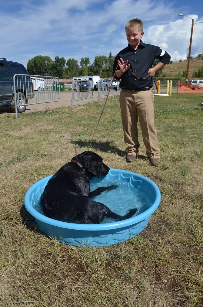 Tristan Singer, 12, took his year-old black Labrador retriever R.J. straight to the puppy pool to cool off Monday after they took a turn in the show ring at the 4-H dog show that kicked off the Routt County Fair.