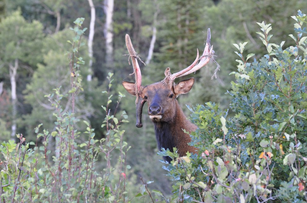 World Record Non Typical Elk World Record Non Typic...