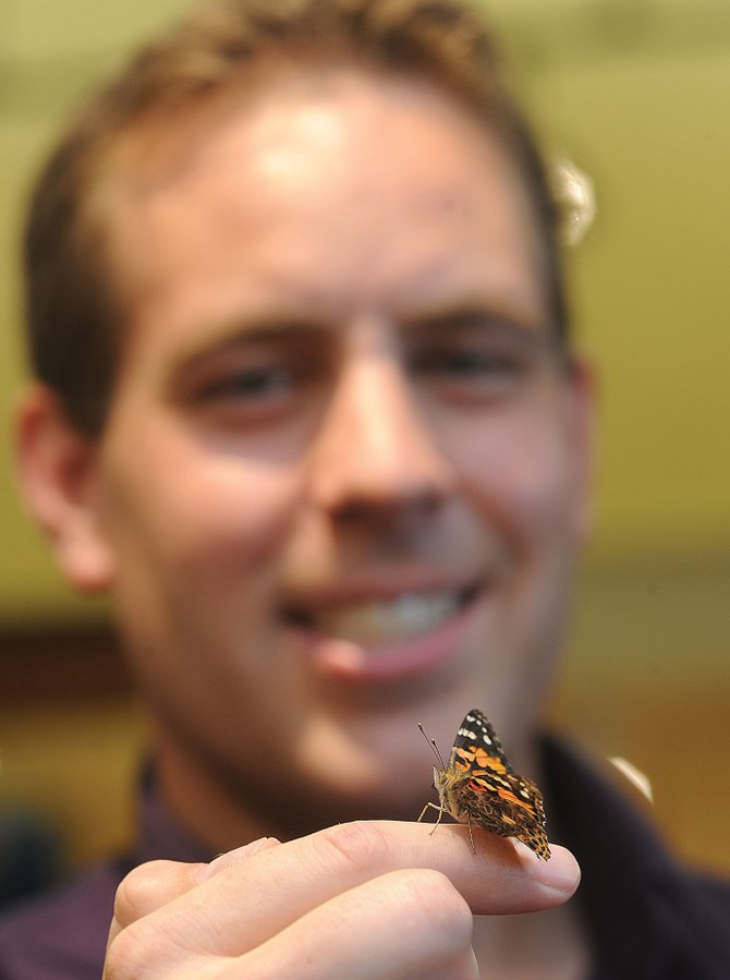 Chris Dillenbeck, who owns Chrysalis along with his wife, Lindsay, holds a painted lady butterfly. The butterfly is one of more than 50 that lives in an enclosure inside the downtown store. Dillenbeck is hoping the enclosure will become a featured attraction at the store and might be used for education opportunities for area children.