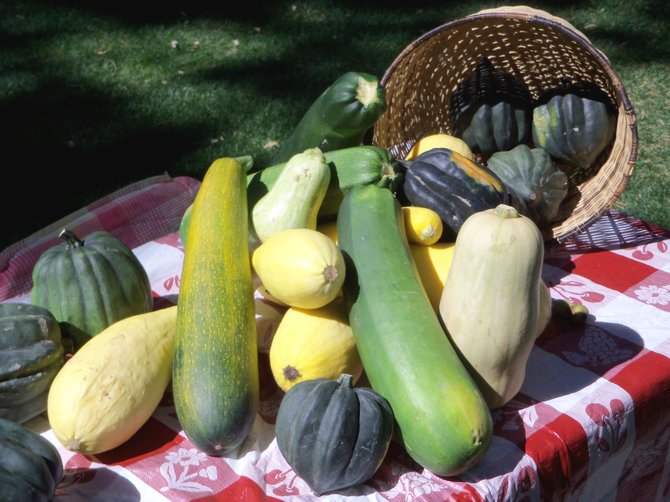 Zucchinis and other gourds sit atop the table of Sherri White last week at the final Craig Farmers Market of the year. Thursday marks the arrival of the cook-off event Taste of Zucchini, sponsored by The Kitchen Shop, where people can enter their best zucchini dishes for prizes. The day also will feature the Upcycle Contest, sponsored by Favorite Things and Community Budget Center, in which people can repurpose old items around the house with a whole new use.