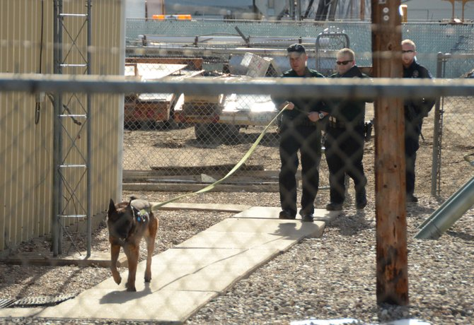 A Moffat County Sheriff's Department dog searches for a man who fled from a traffic stop Wednesday in Craig. The man had not been found as of 12:30 p.m. Wednesday.